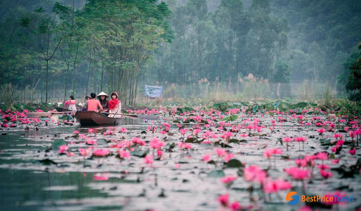Water Lily in Yen Stream