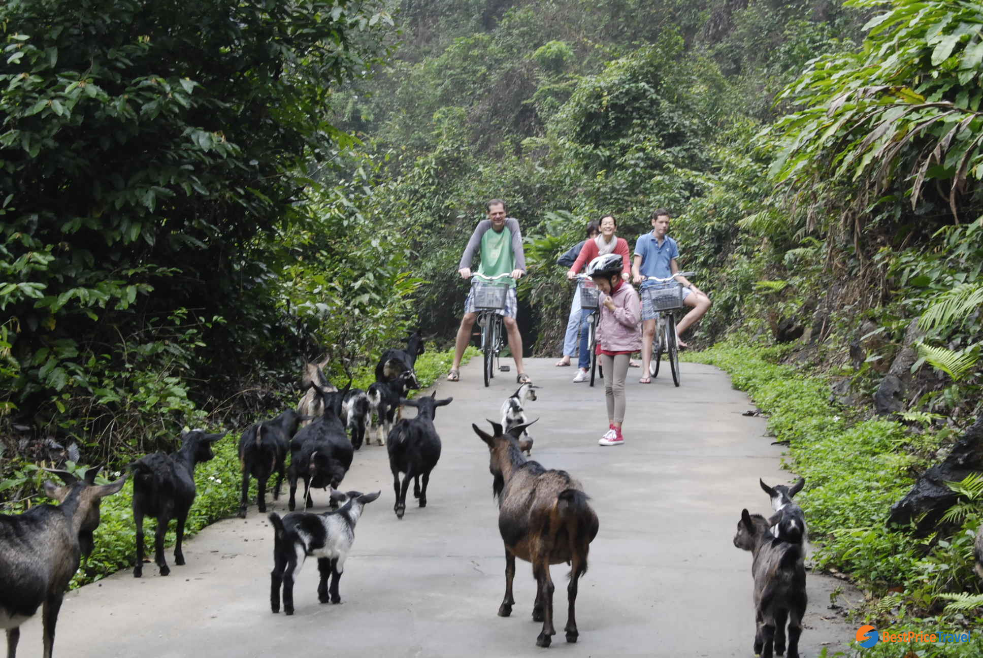 Tips for saving money on halong bay trip