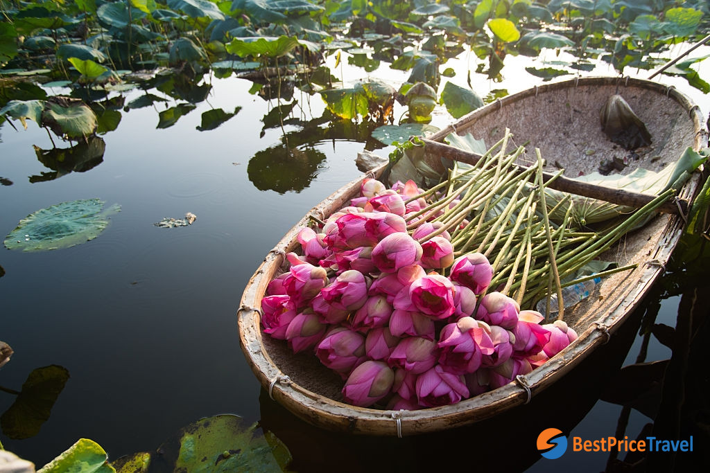 Lotus Flower - Vietnam Photography