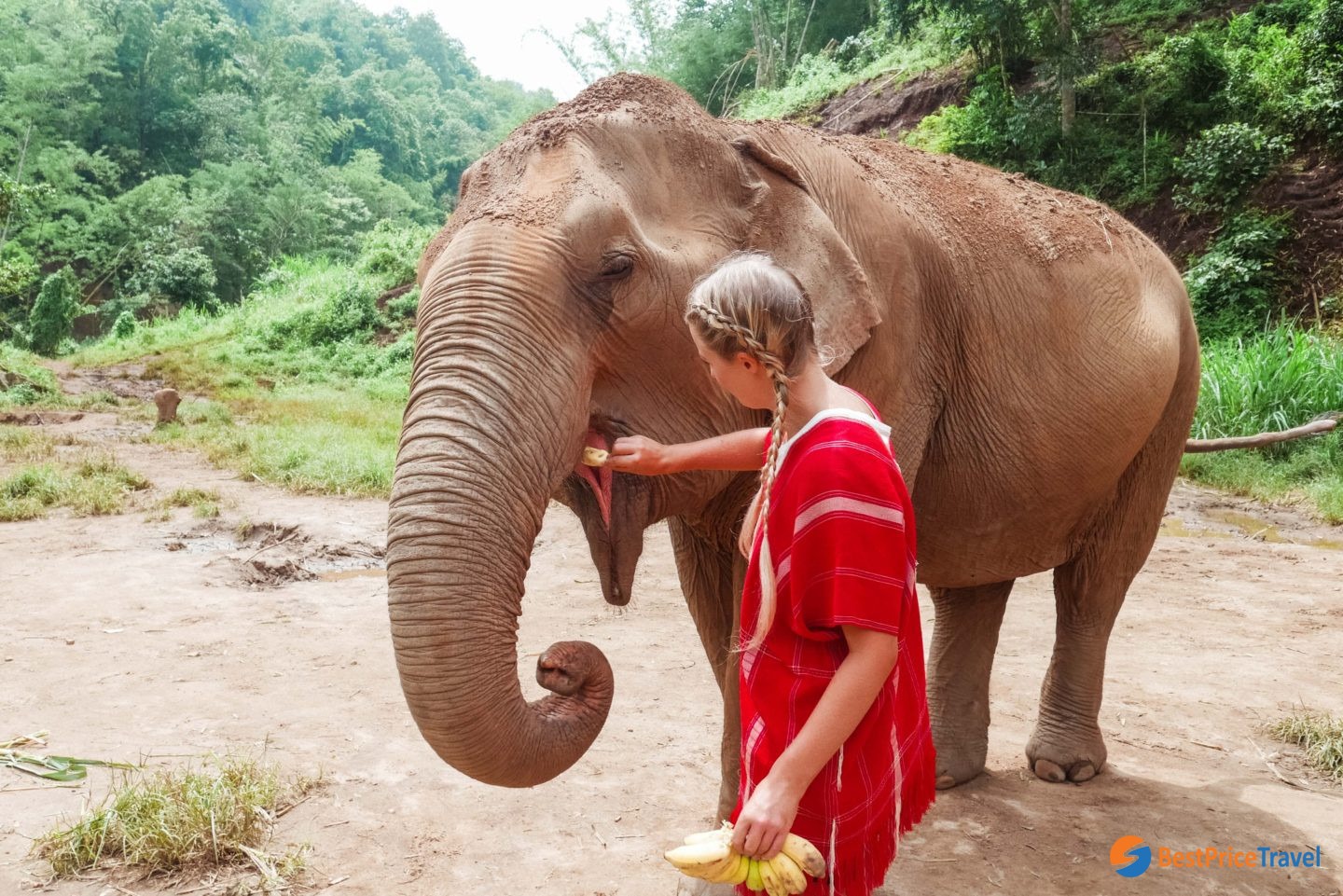 Feeding the elephants is the first step to get familiar with them
