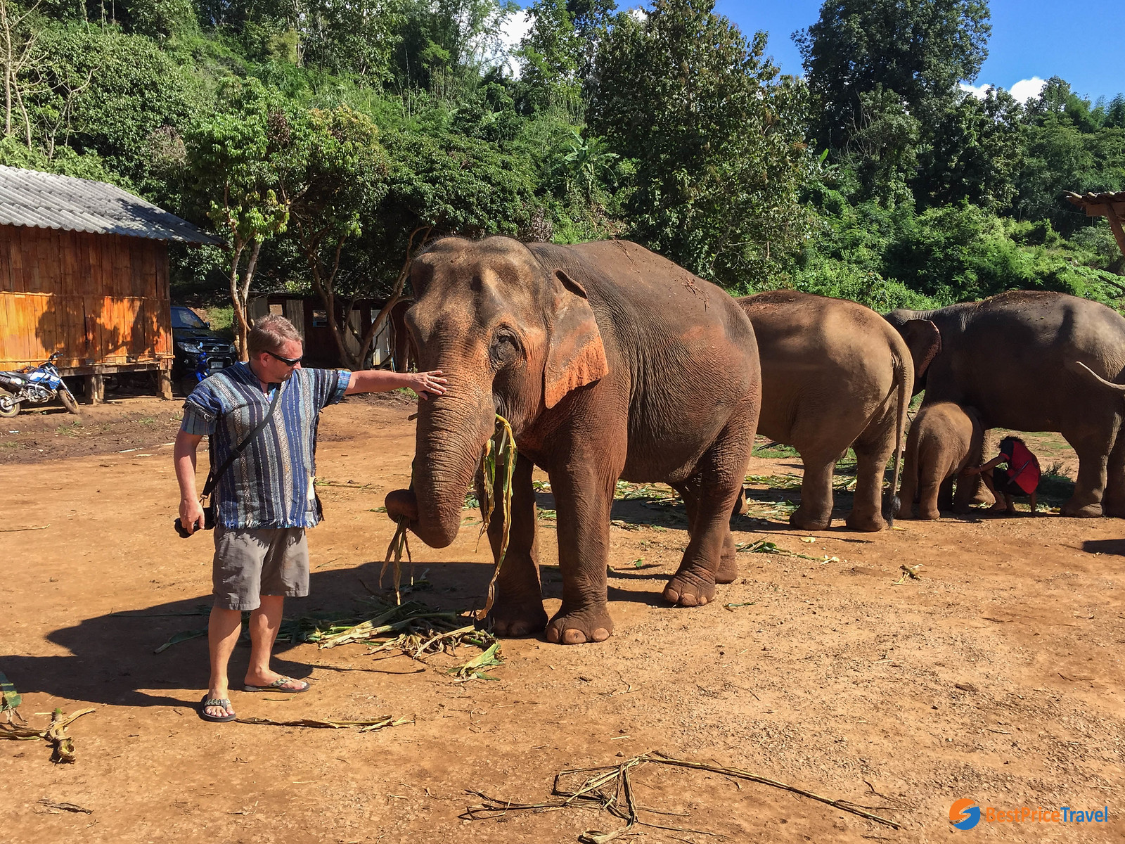 There are many ethical elephant sanctuaries in Chiang Mai