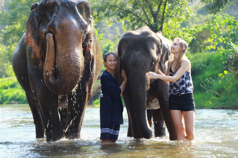 Visit Elephant Sanctuary in Chiang Mai in rainy season