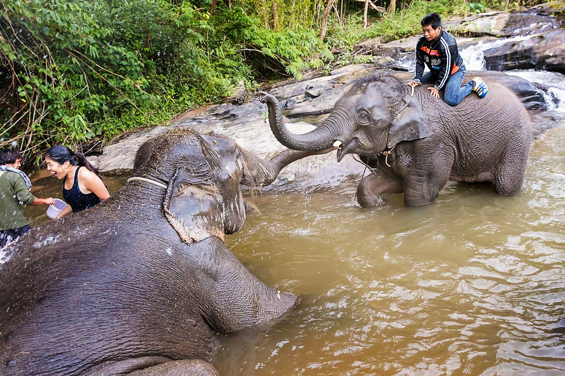 Elephant Jungle Sanctuary - Experience of the Best 6-day in Thailand