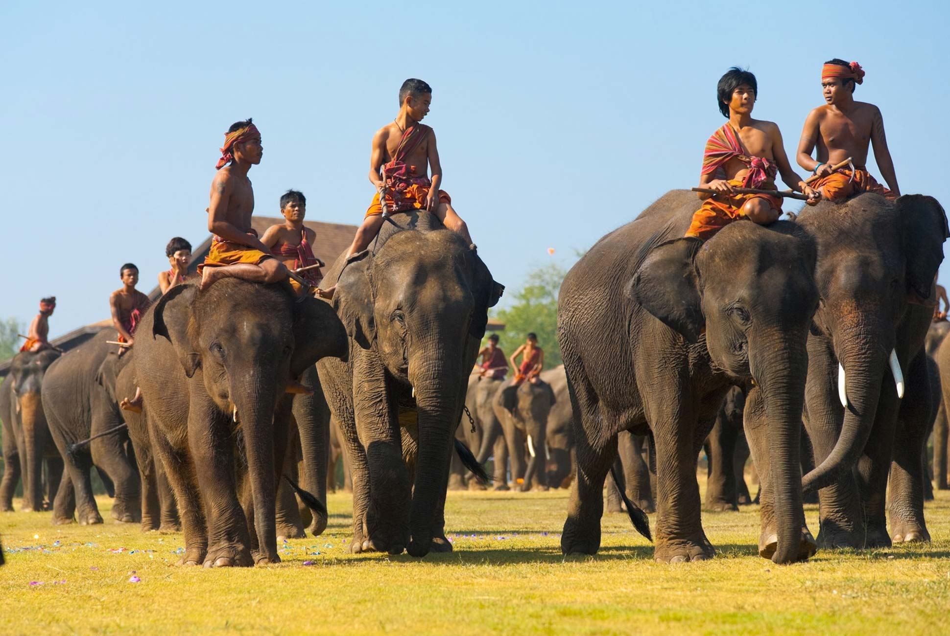 The excitement of Surin Elephant Festival