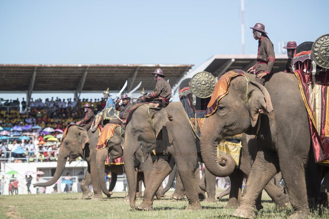 Surin Elephant Festival
