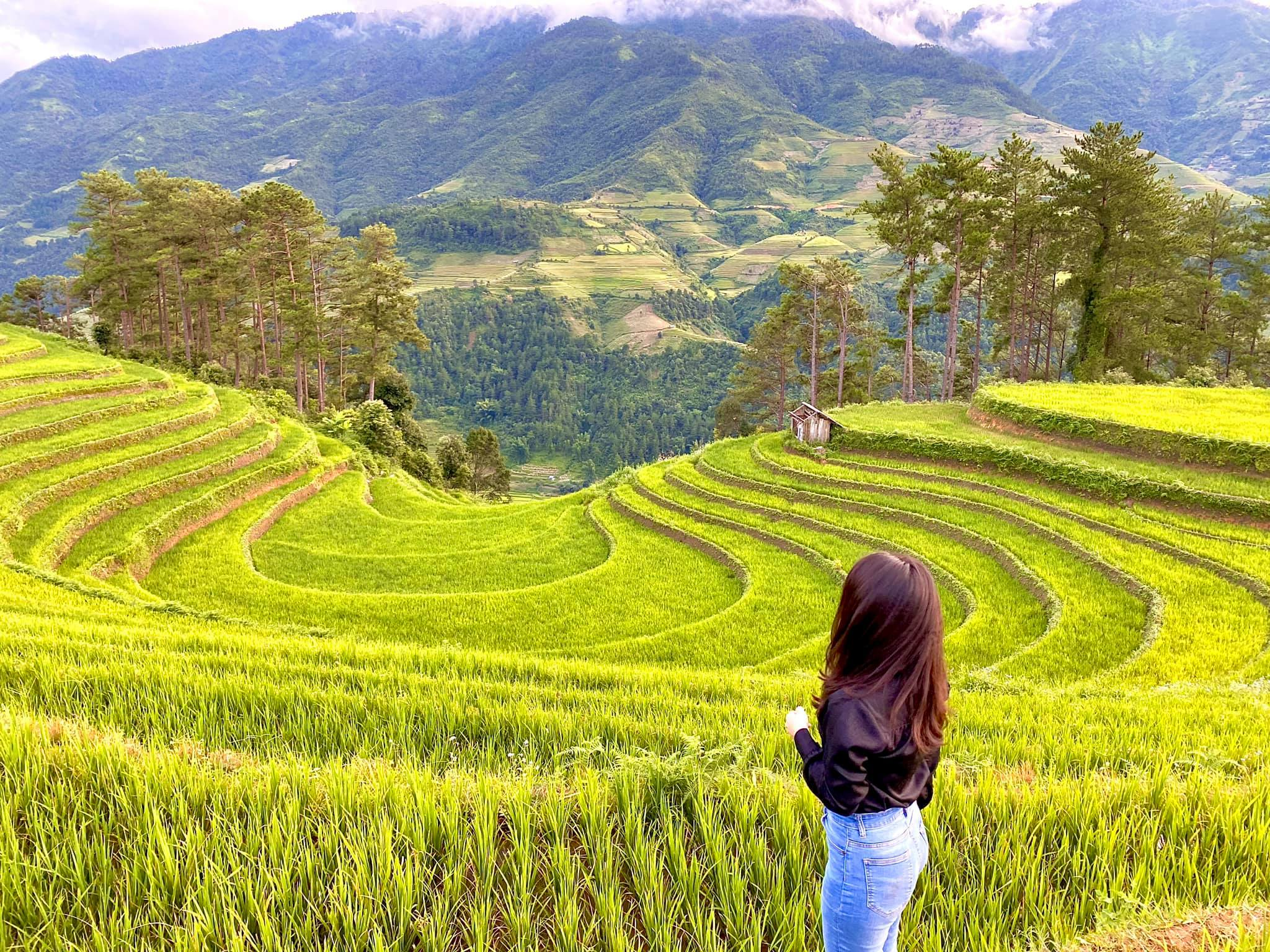 best time to see vietnam rice terraces