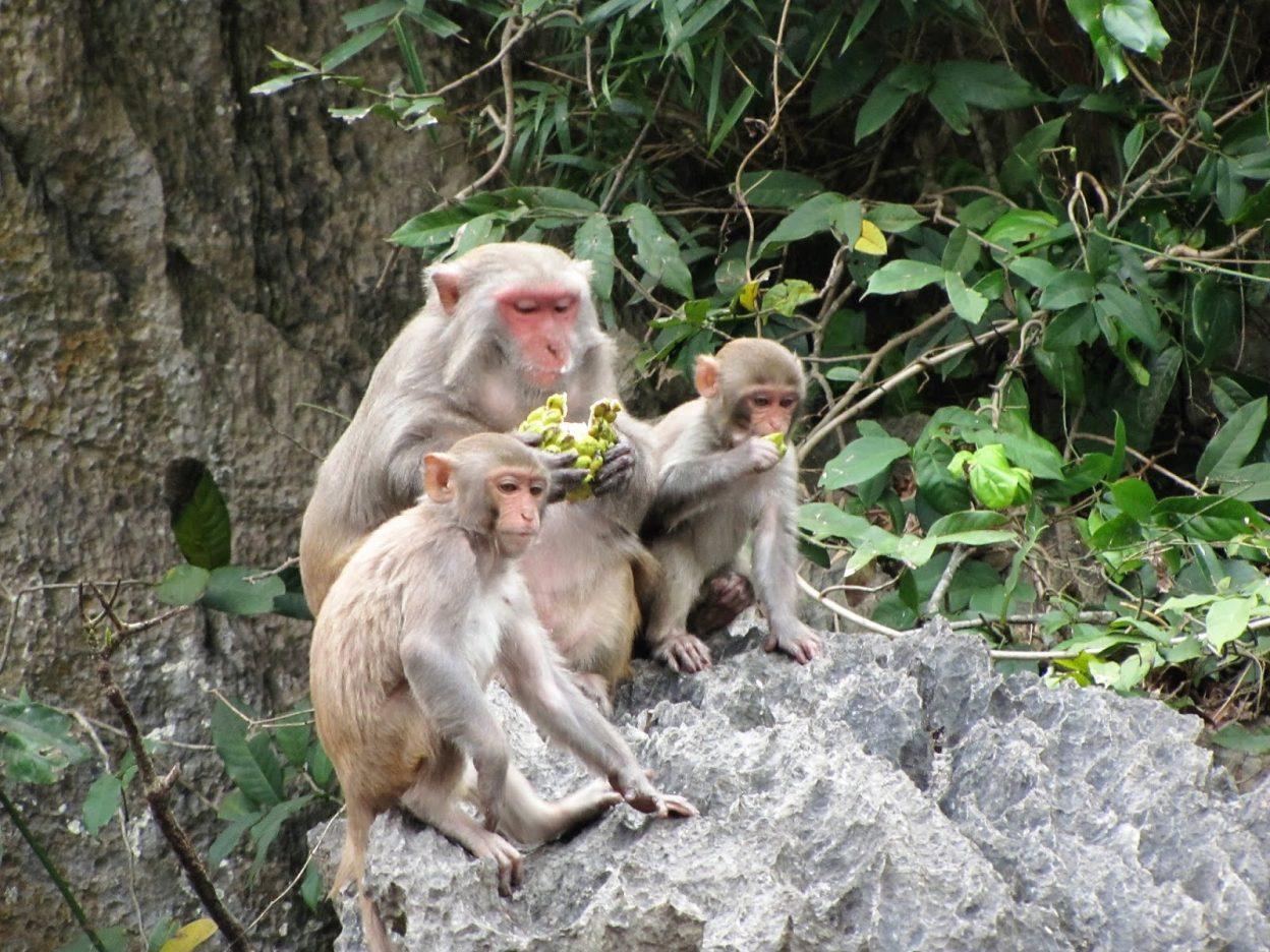 Monkey Island - Things to do in Cat Ba