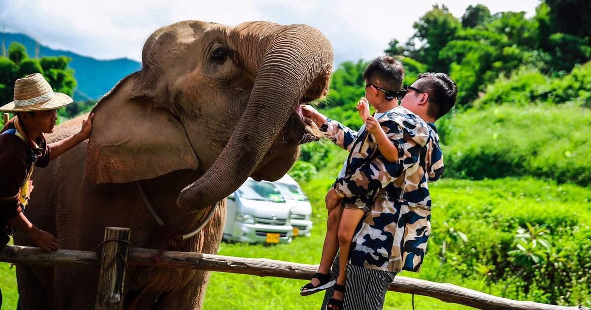 Mae Sa Elephant Camp - 15-day Thailand Itinerary