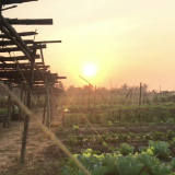 Experience Rural Life and Cooking at Organic Farm in Hoi An