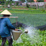 Life as a Farmer in Cam Thanh village