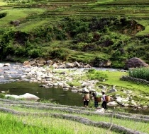 Locals Walking Through The Rice Terraces.