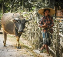 Local in Shan villages