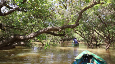 Mangrove Exploration Full Day