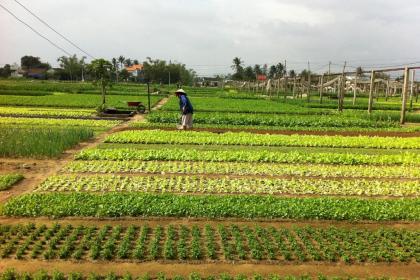 Tra Que Vegetable Village Half-day