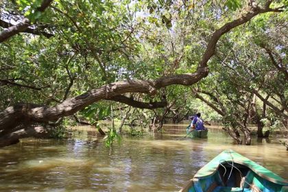 Mangrove Exploration Full Day