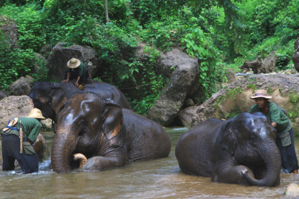Kalaw Elephant Camp and Replantation with lunch