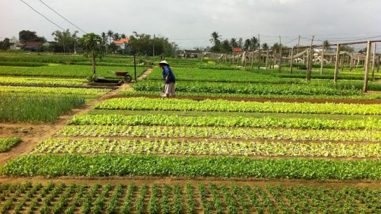 Tra Que Vegetable Village Half-day - No 2 Eco Tour