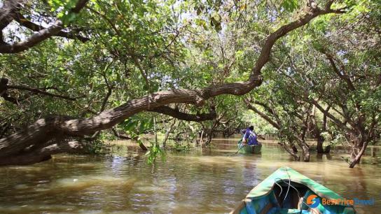 Mangrove Exploration Full Day - No 3